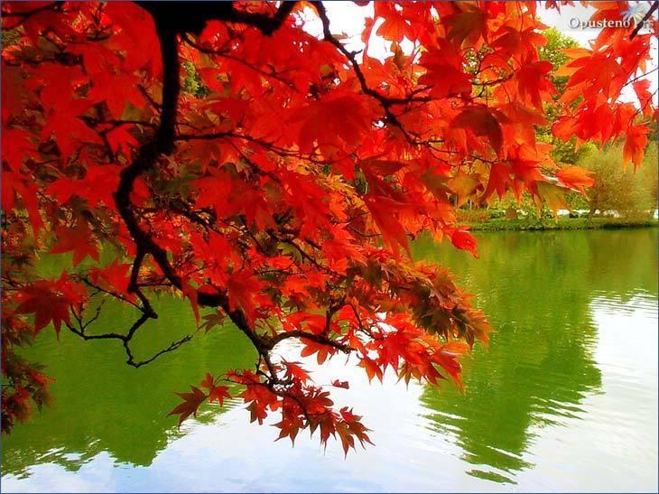 Komentar: Najlepše slike jeseni