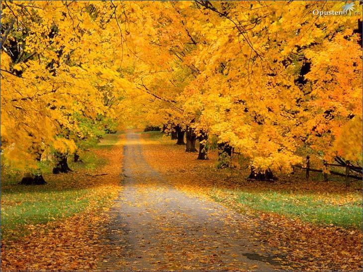 Najlepše Slike Jeseni Slika Najlepse Slike Jeseni 19