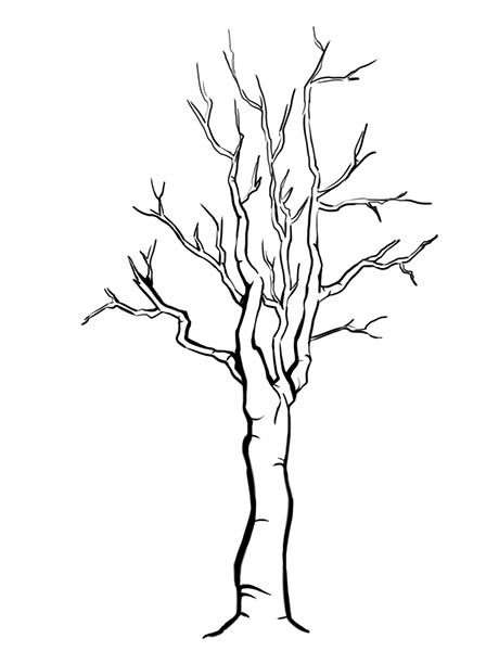 How To Draw Trees Without Leaves How To Draw Trees