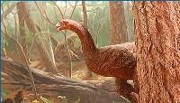 i zablude o dinosaurusima O Dinosaursima